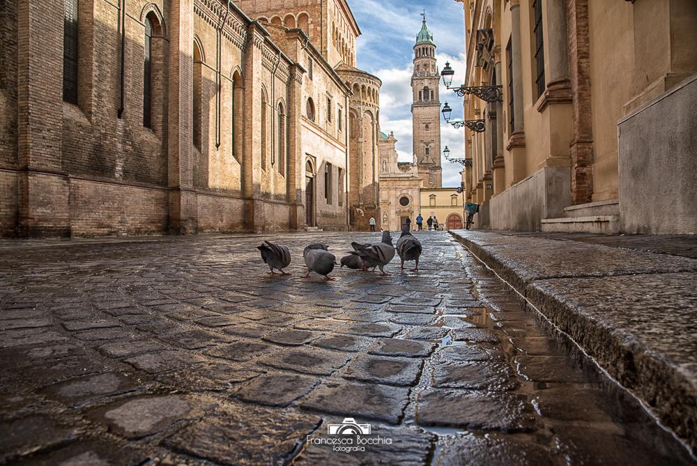 Parma_piccioni_dalbasso